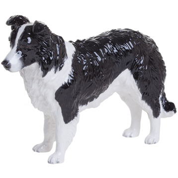 Border Collie, Black & White