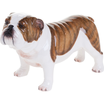 British Bulldog, Brindle